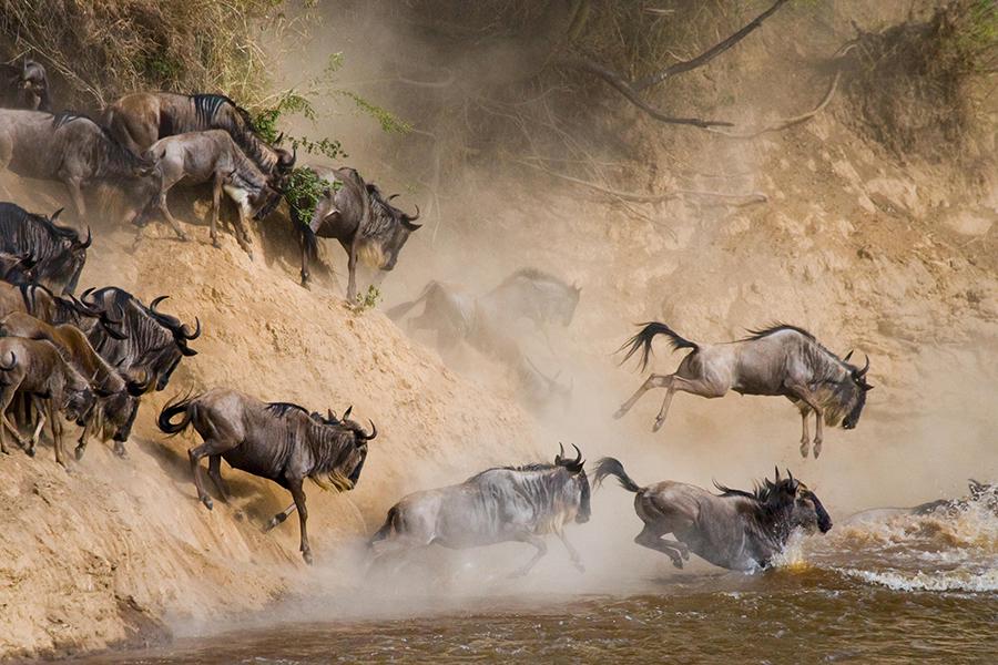 Nimali Central Serengeti-Migration-crossing-