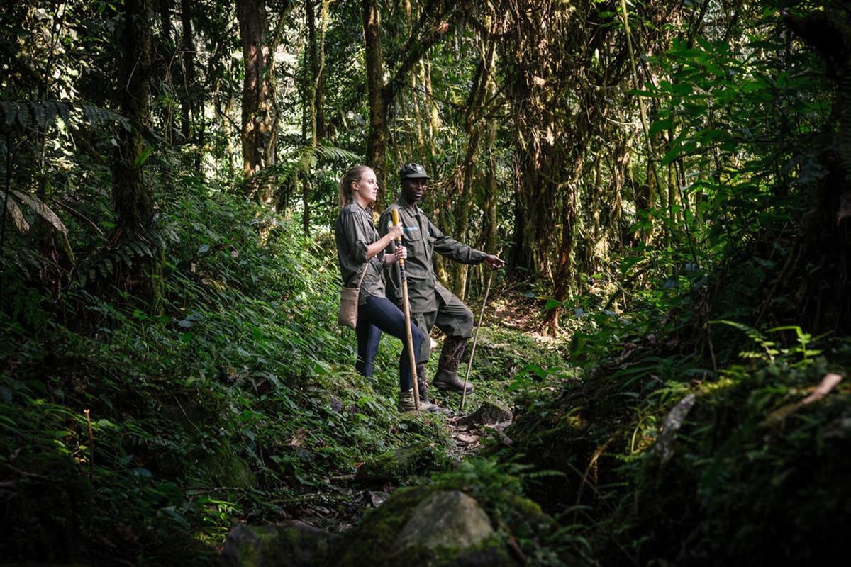 tour-5_sanctuary-gorilla-forest-camp