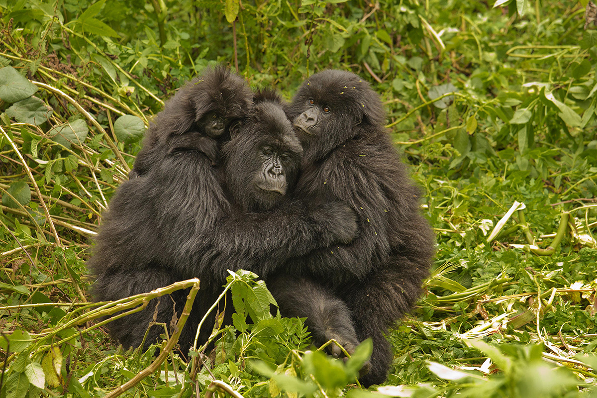tour-6_volcanoes-virunga-lodge