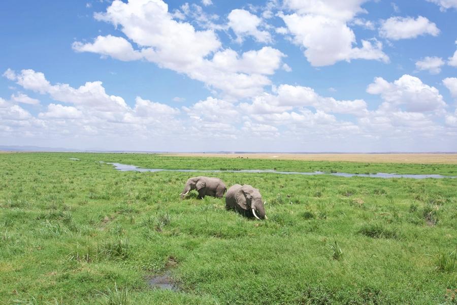 Elephants in Amboseli National Park, Kenya | Go2Africa