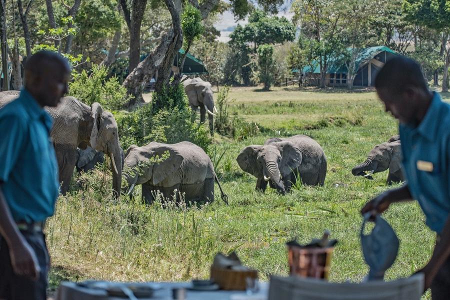 Elephants at Governors' Camp, Masai Mara, Kenya | Go2Africa